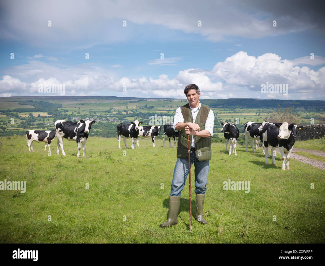 Farmer standing in field with cows - Stock Image