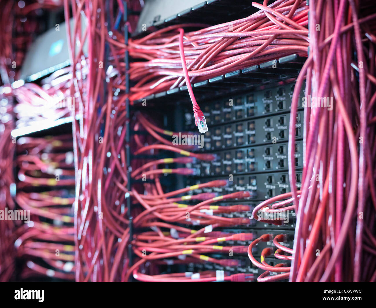 Close up of cables in server room - Stock Image