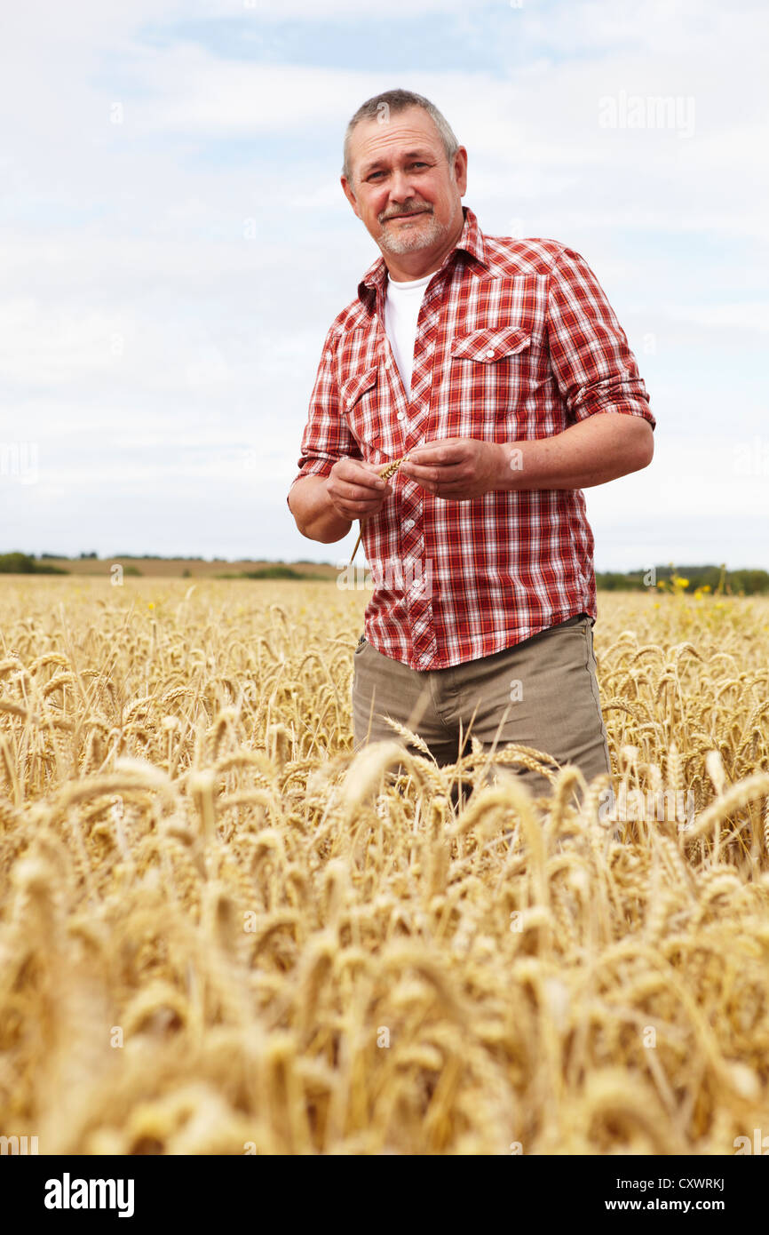 Farmer Standing In Field Checking Crop - Stock Image