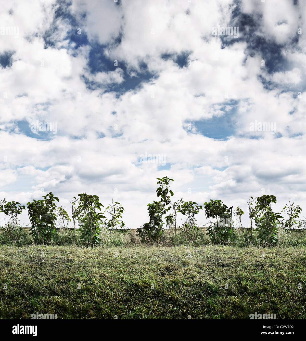 Shrubs growing in rural field Stock Photo