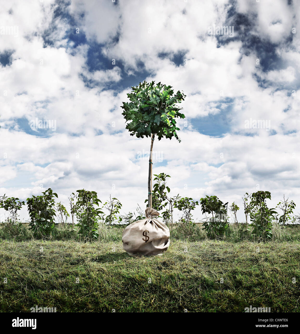 Tree growing out of money bag outdoors - Stock Image