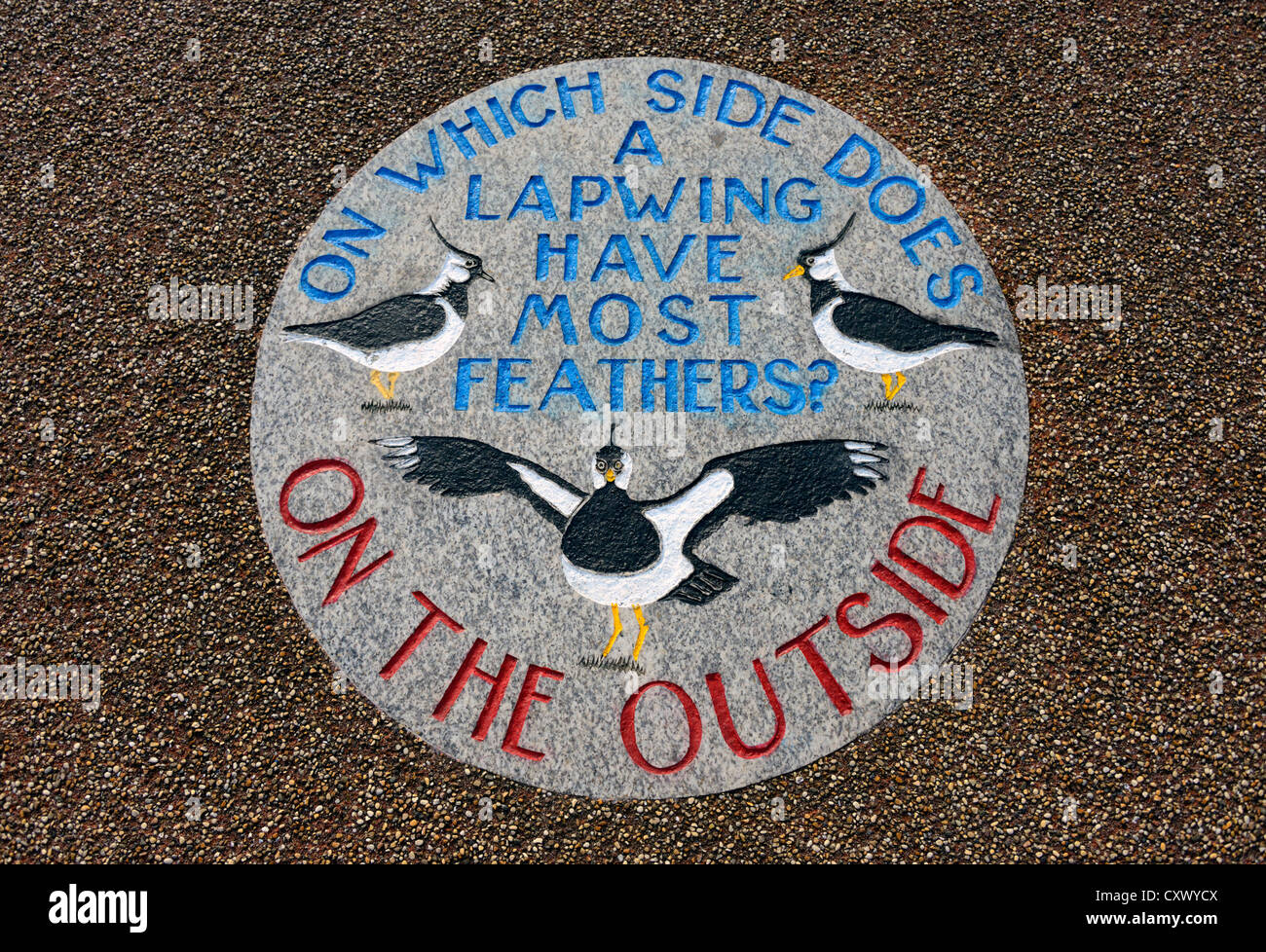 'WHICH SIDE DOES A LAPWING HAVE MOST FEATHERS?  ON THE OUTSIDE'. The Tern Project, The Stone Jetty, Morecambe, - Stock Image