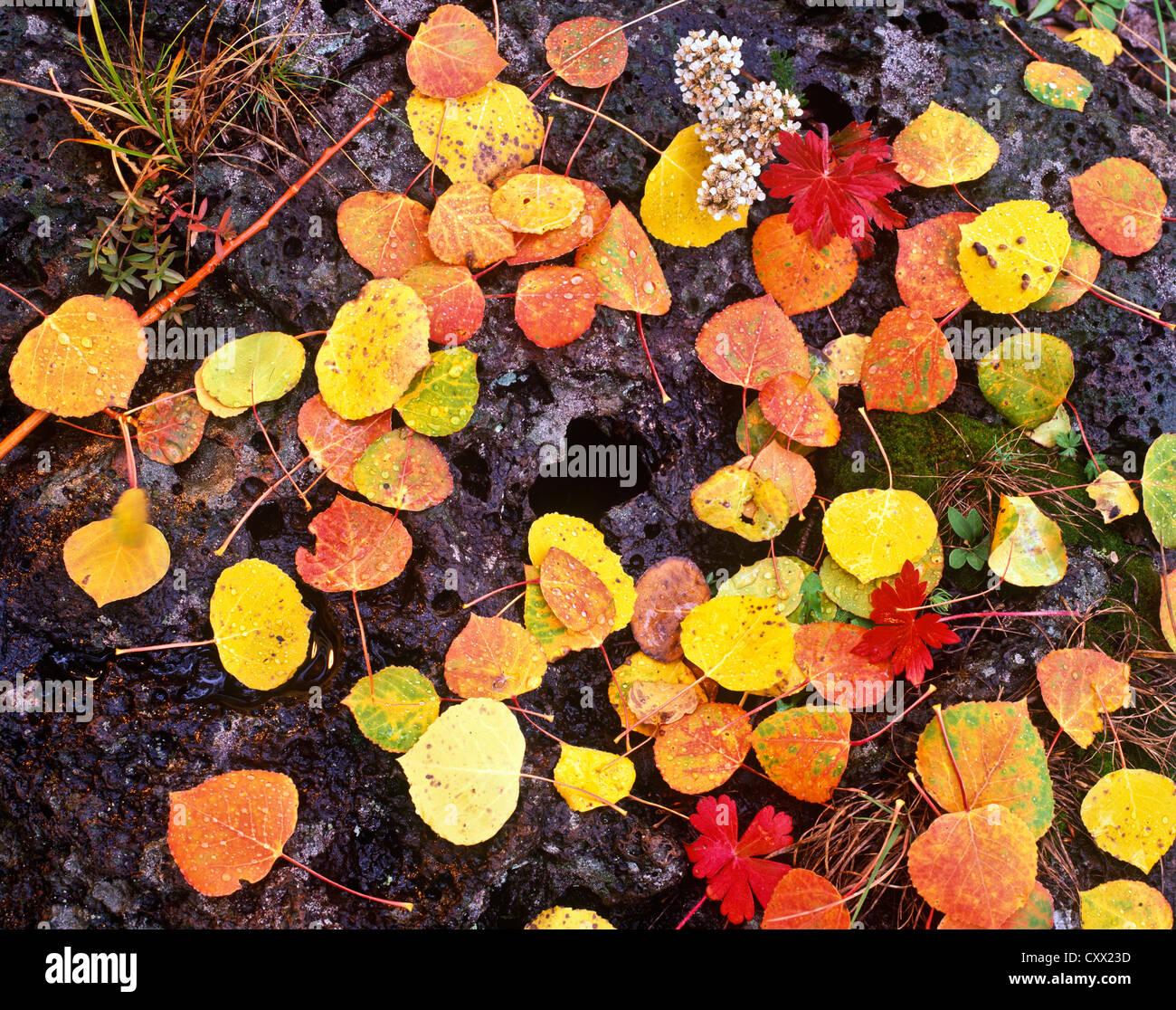 Saddle Mountain Wilderness Area, Marble Point overlook, Sunrise. Arizona.USA Autumn Colors. - Stock Image
