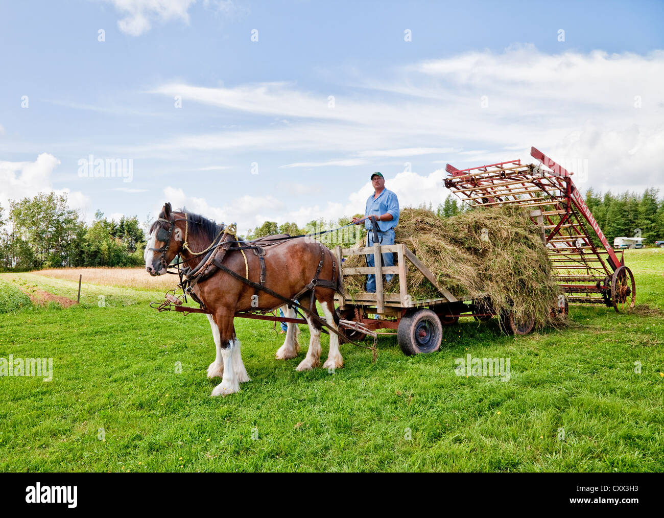 horse drawn hay loader at at the provincial plowing match and parade