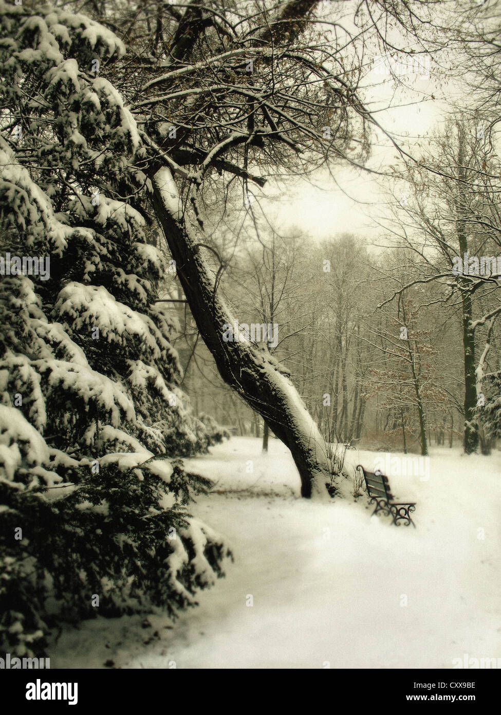 a landscape with a garden in winter, with a little bench on the right, covered with snow, and a tree in the centre. - Stock Image