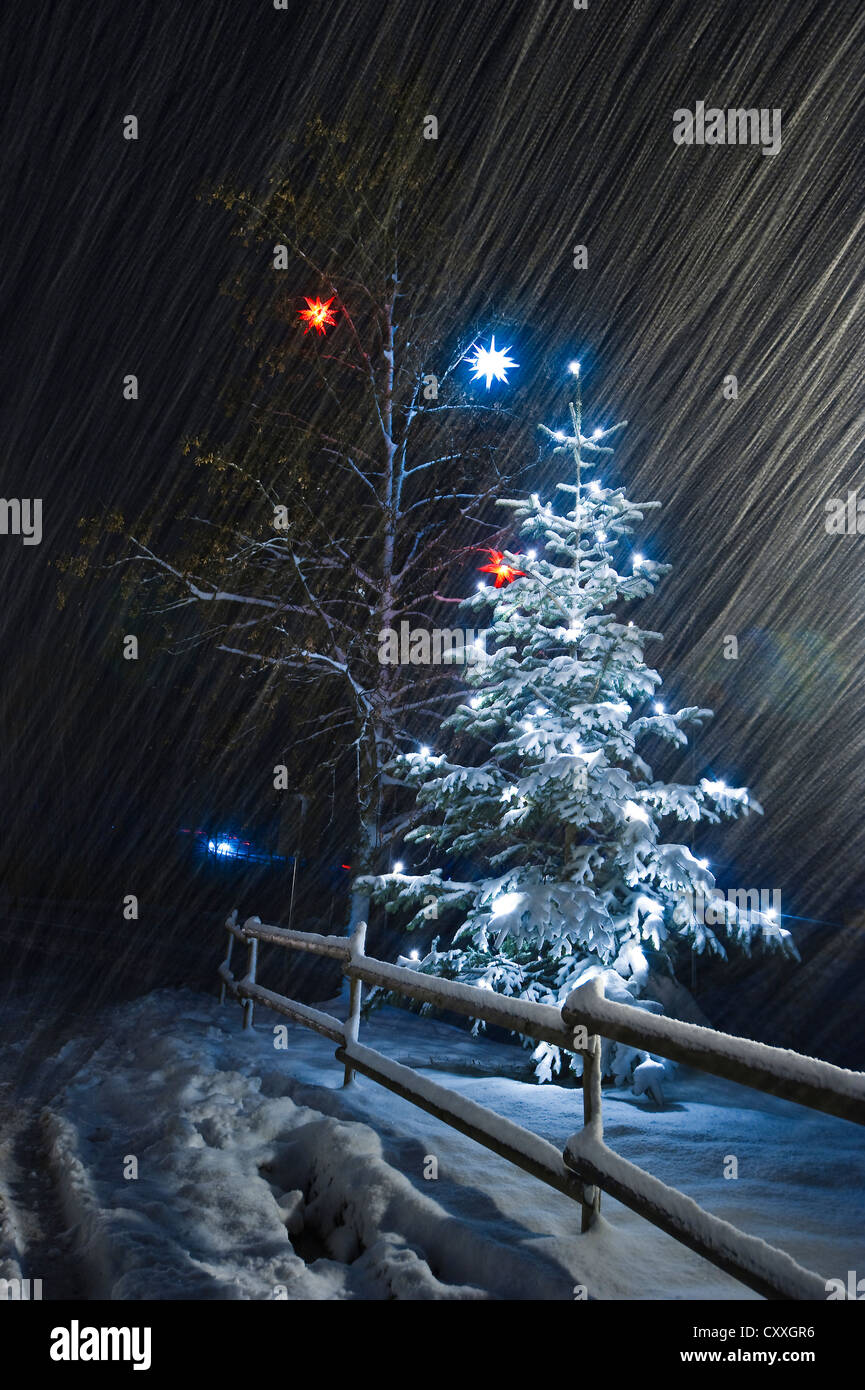 Illuminated Christmas tree in the snow, snowfall, Dreisamtal valley, Black Forest mountain range, Baden-Wuerttemberg - Stock Image