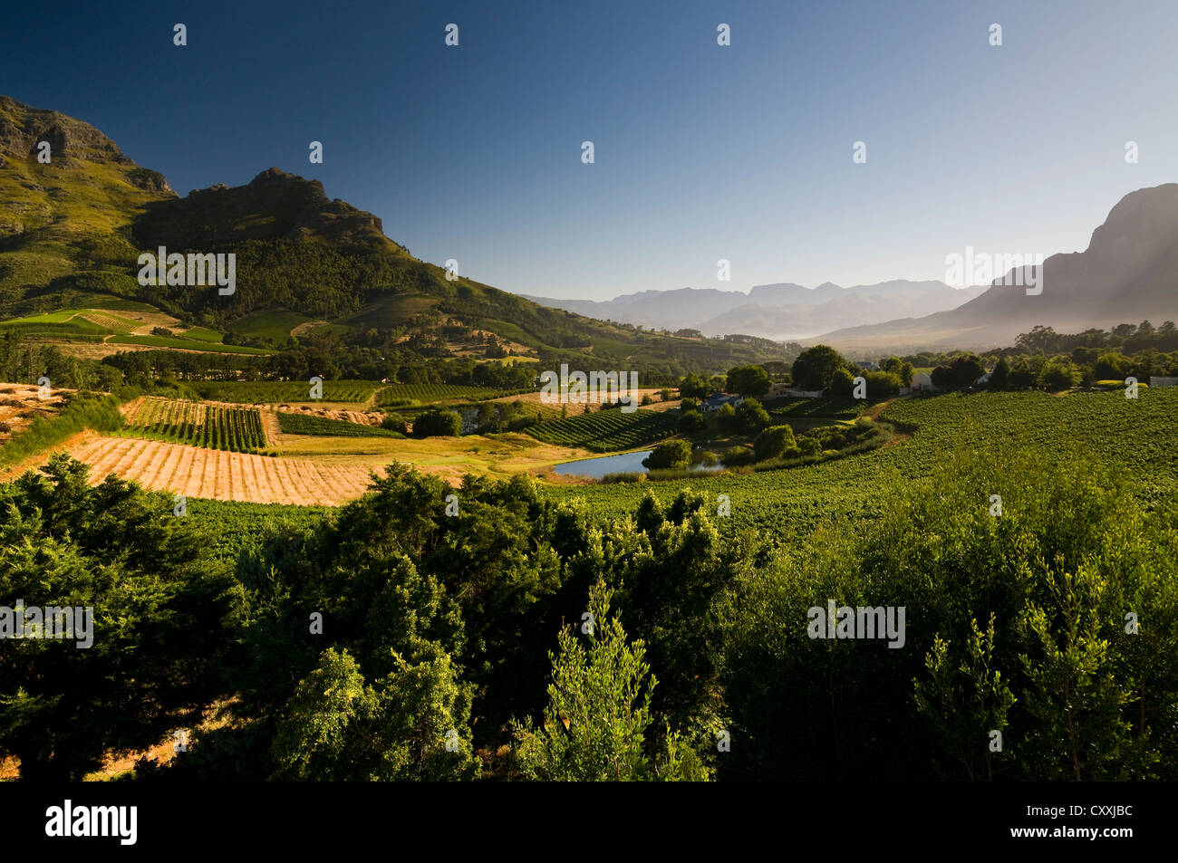 Landscape, vineyards, Stellenbosch area, Western Cape, South Africa, Africa - Stock Image