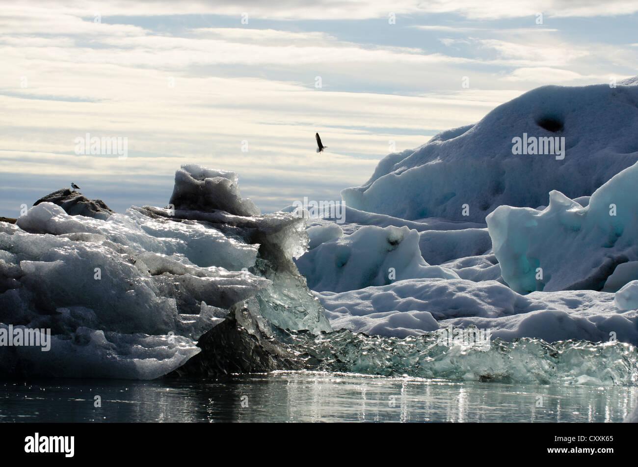 Gulls (Laridae) over blue and black ash-coloured icebergs and ice crystals, glacier lagoon of Joekulsárlón - Stock Image