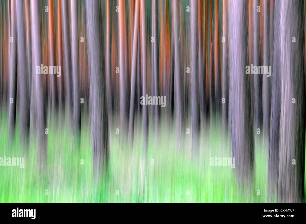 Abstracted view of a pine forest in Saxony - Stock Image