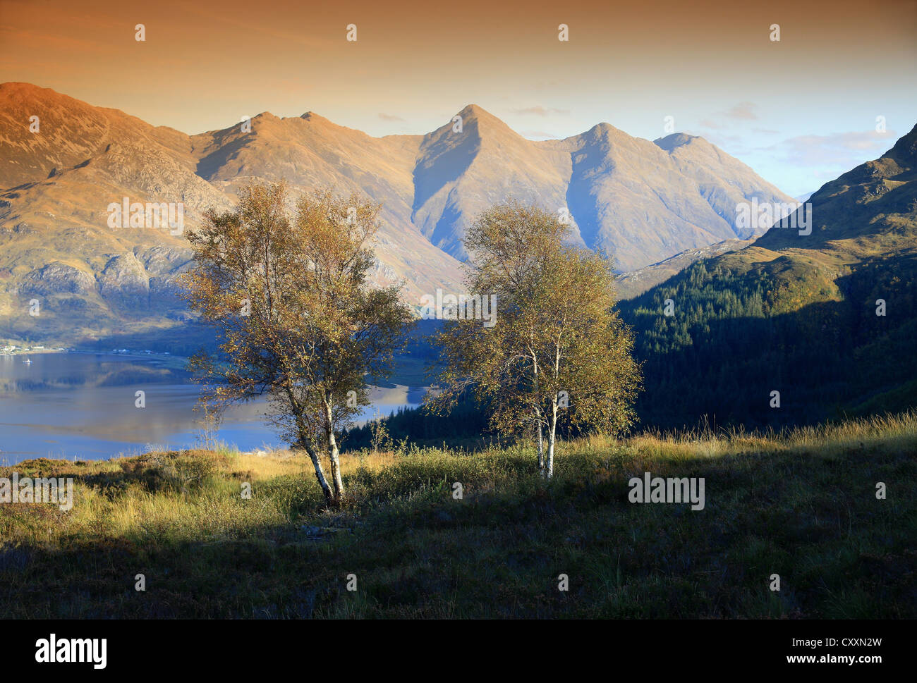 The Five Sisters of Kintail and Loch Duich, with silver birches in the foreground, are a much visited area of the - Stock Image