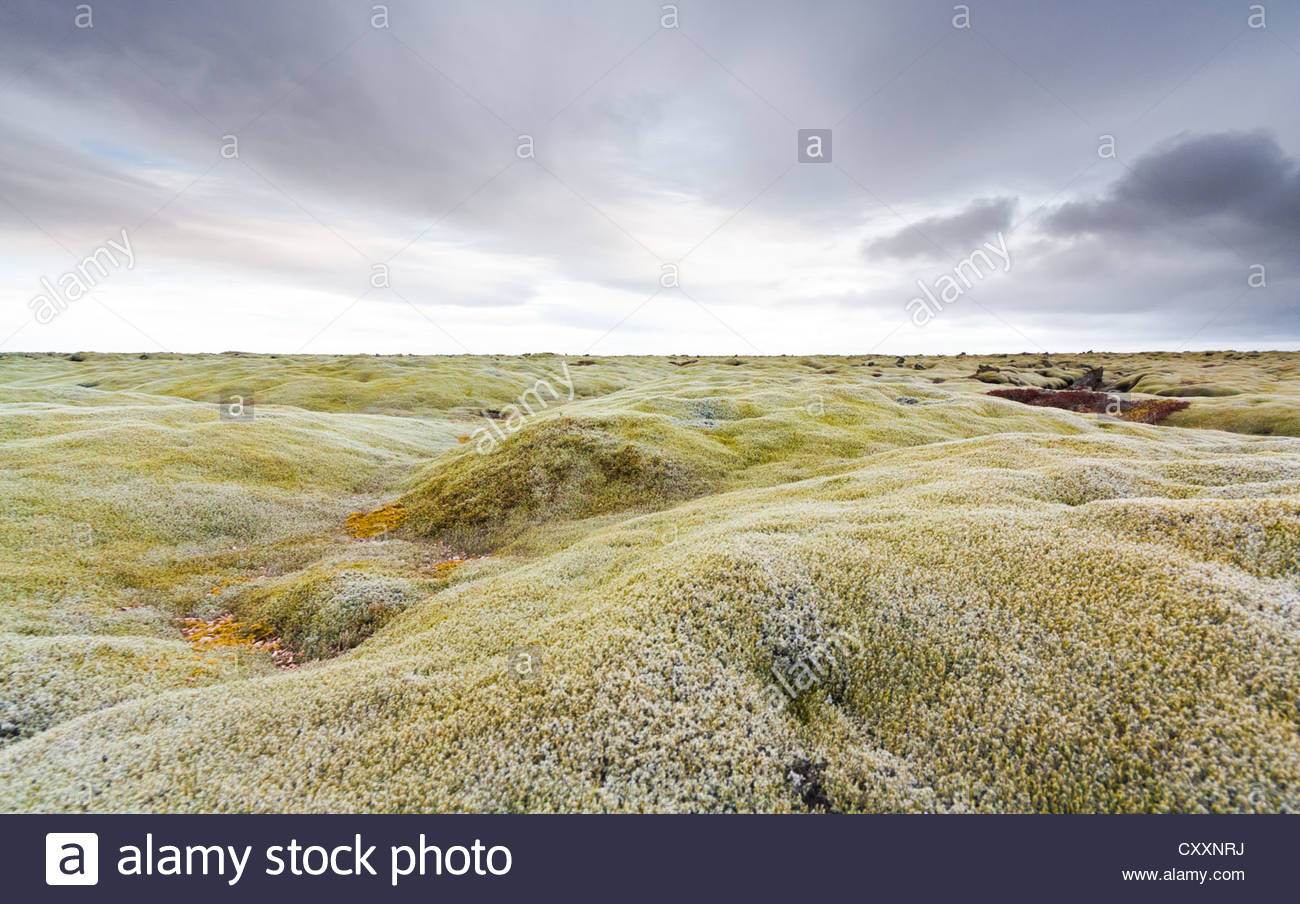 Moss covered lava field in Iceland - Stock Image