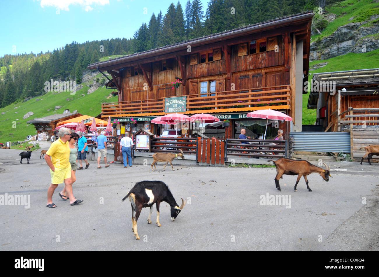 Les Lindarets goat village, Les Lindarets, France - Stock Image