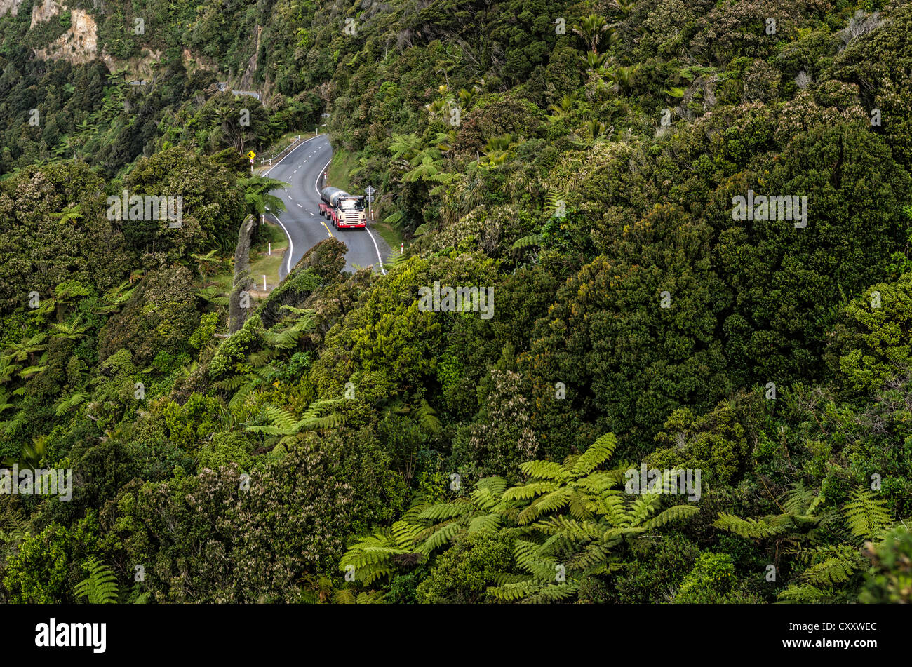 Truck on a country road in dense rain forest, Paparoa National Park, Punakaiki, South Island, New Zealand, Oceania - Stock Image