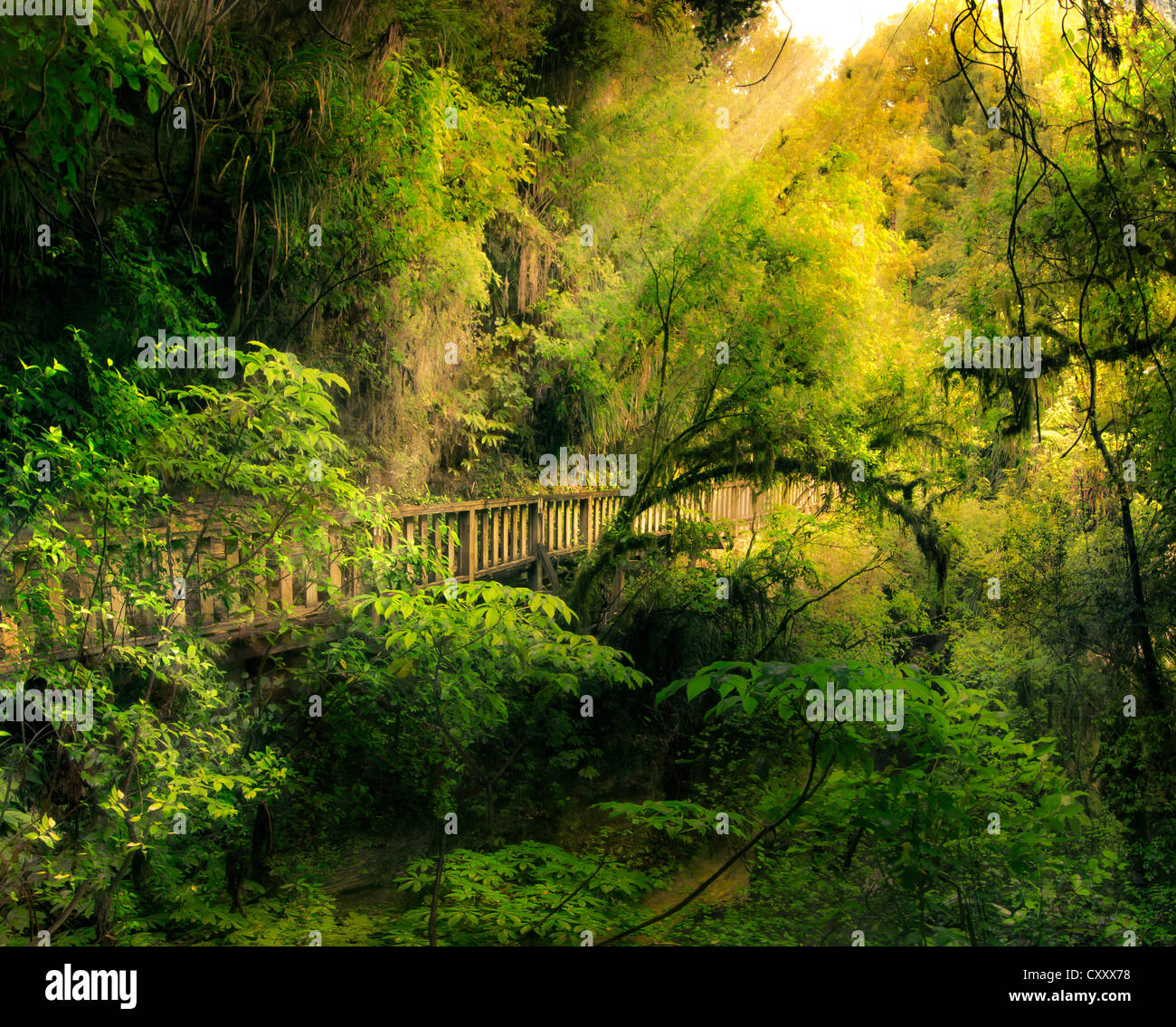 Fairytale forest with a wooden bridge, North Island, New Zealand, composing - Stock Image