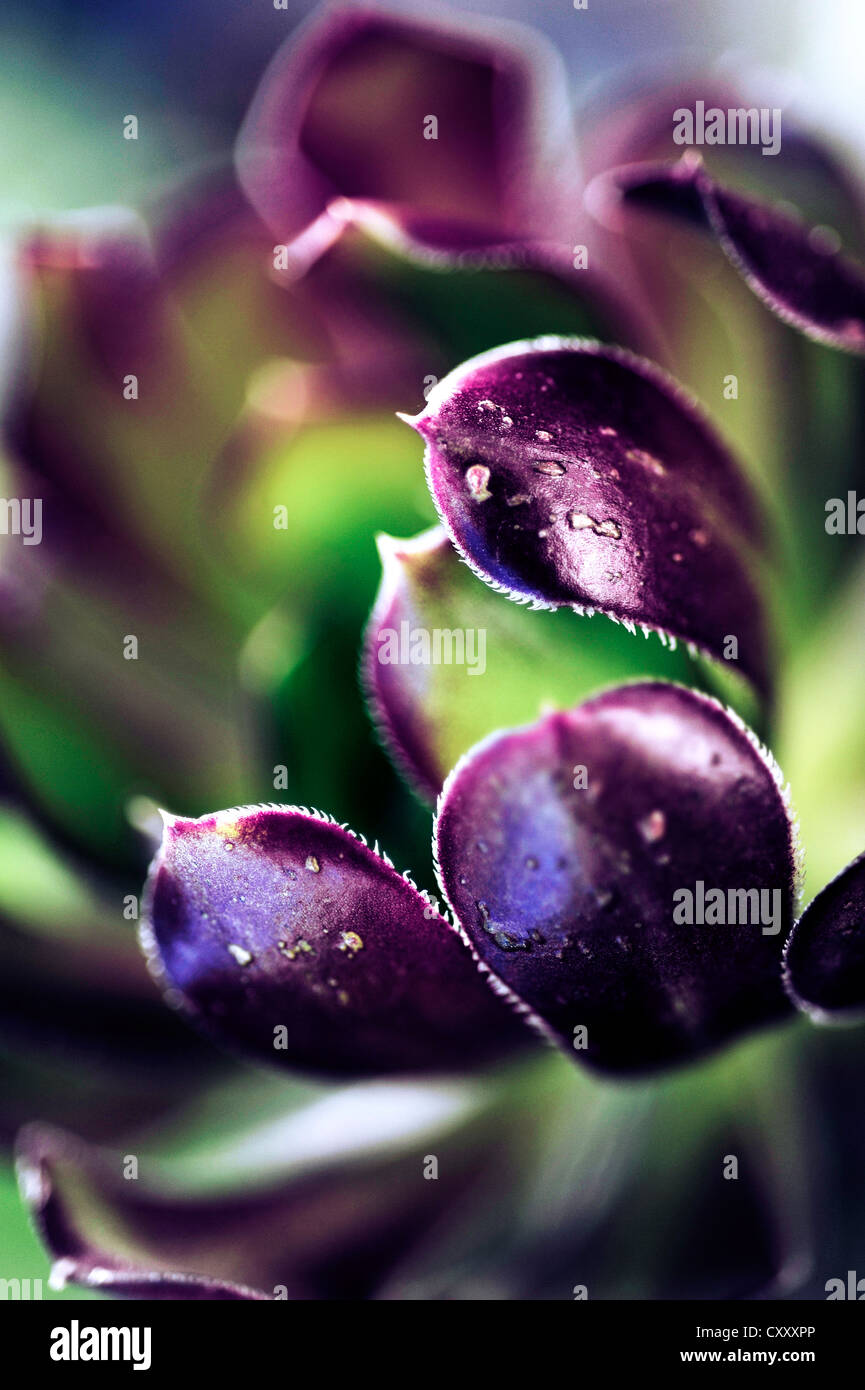 Bloomy leaf - Stock Image