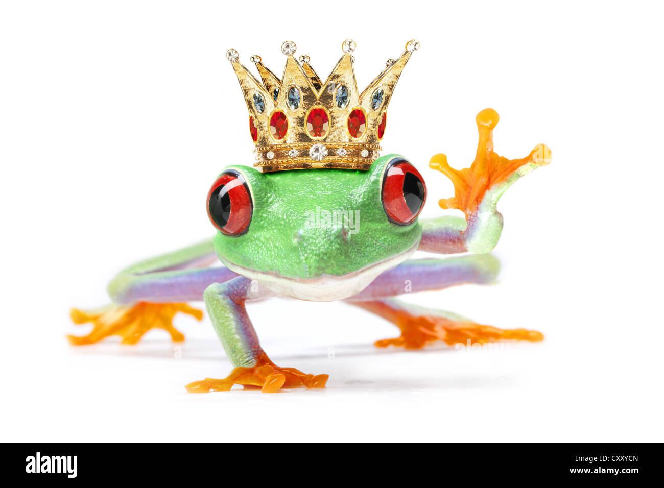 Waving frog wearing a crown Stock Photo