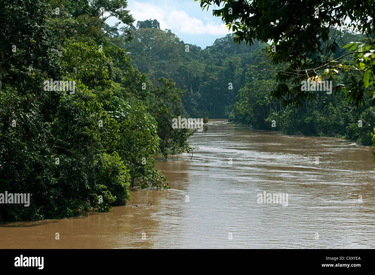Lush rain forest vegetation at the banks of the flooded Tiputini river at the border with Yasuni National Park, - Stock Image