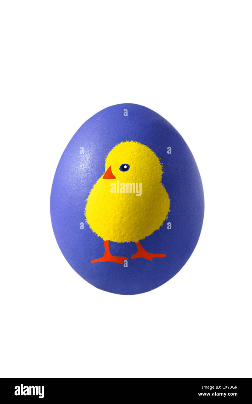 Blue Easter egg with the painting of a chick - Stock Image