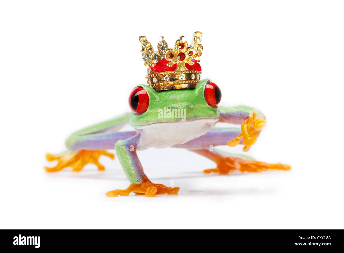 Frog wearing a crown Stock Photo