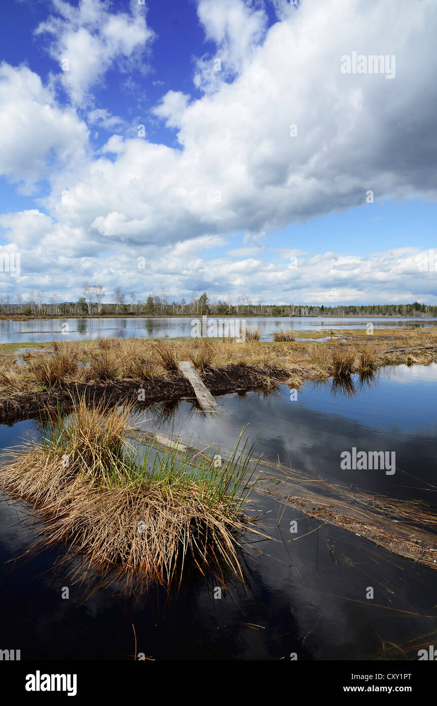 Abandoned peat cutting area with reflection of clouds, Stammbeckenmoor near Raubling, Alpine Uplands, Bavaria - Stock Image