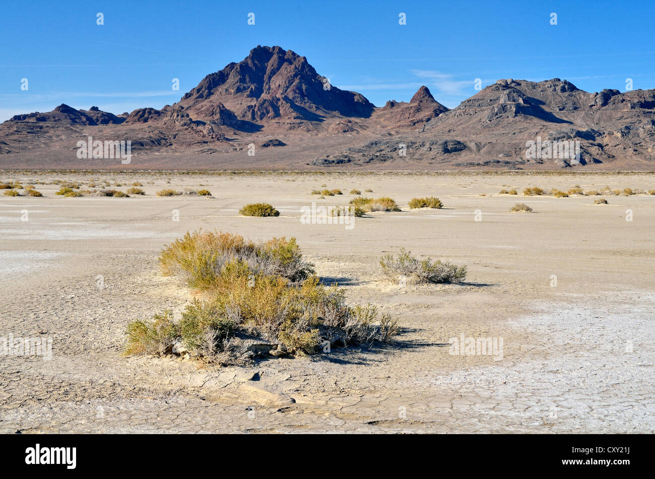 Salt flats at the Bonneville Speedway, Great Salt Lake Desert, Silver Island Mountains at back, Wendover, Utah, - Stock Image