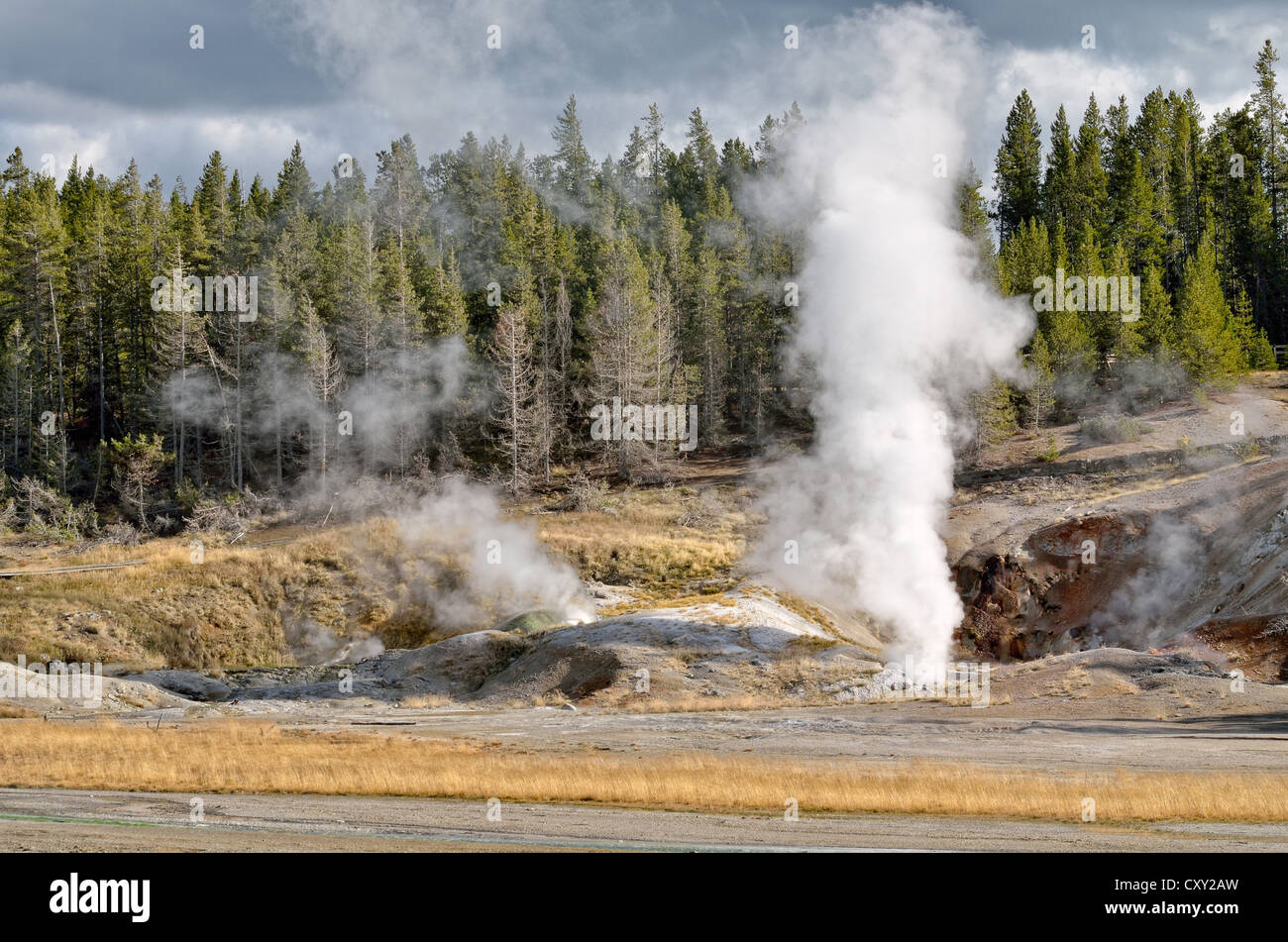 Black Growler Steam Vent, Porcelain Basin, Norris Geyser Basin, Yellowstone National Park, Wyoming, USA - Stock Image
