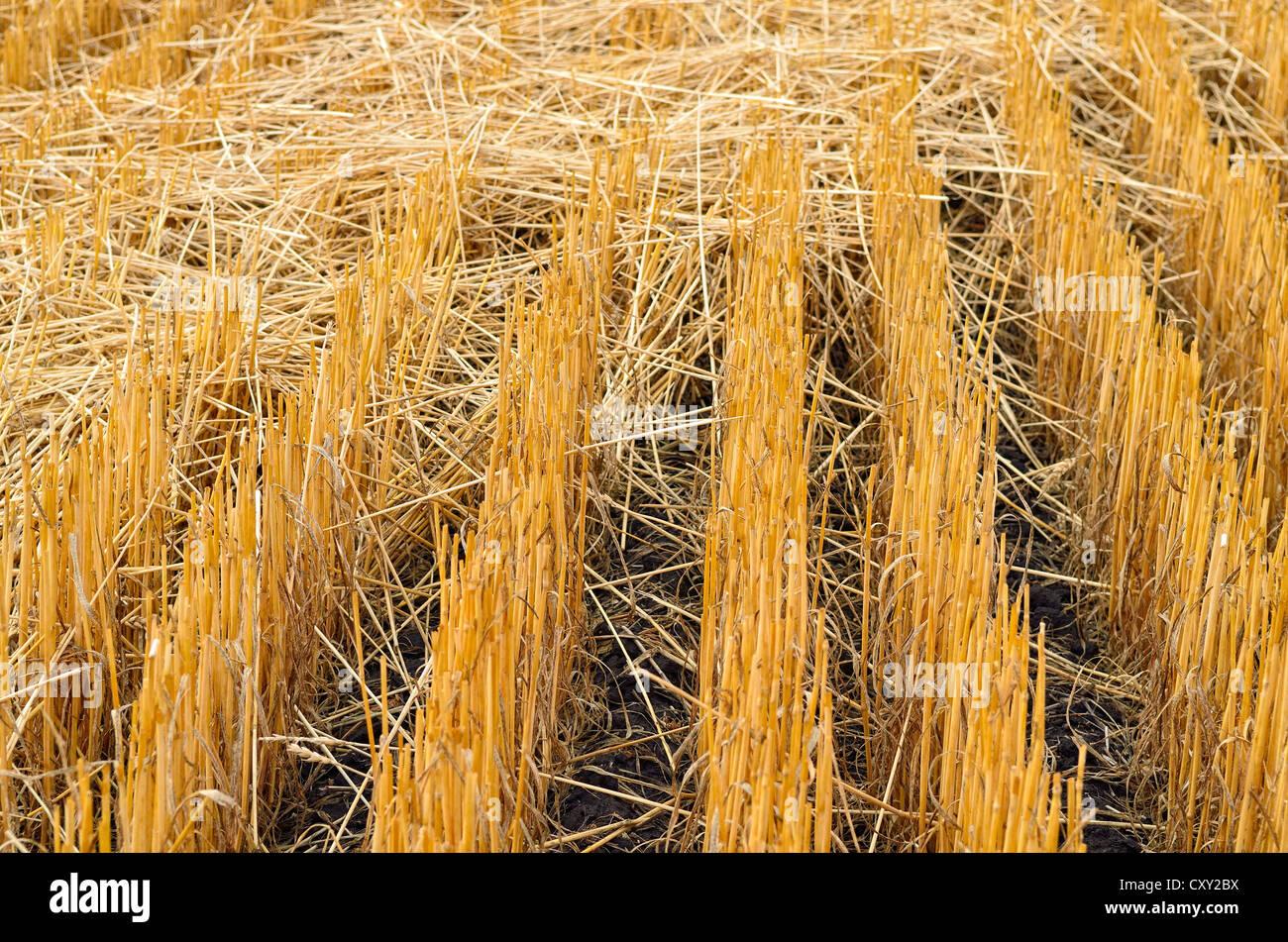Harvested grain field near Moscow, Highway 95, Idaho, USA - Stock Image