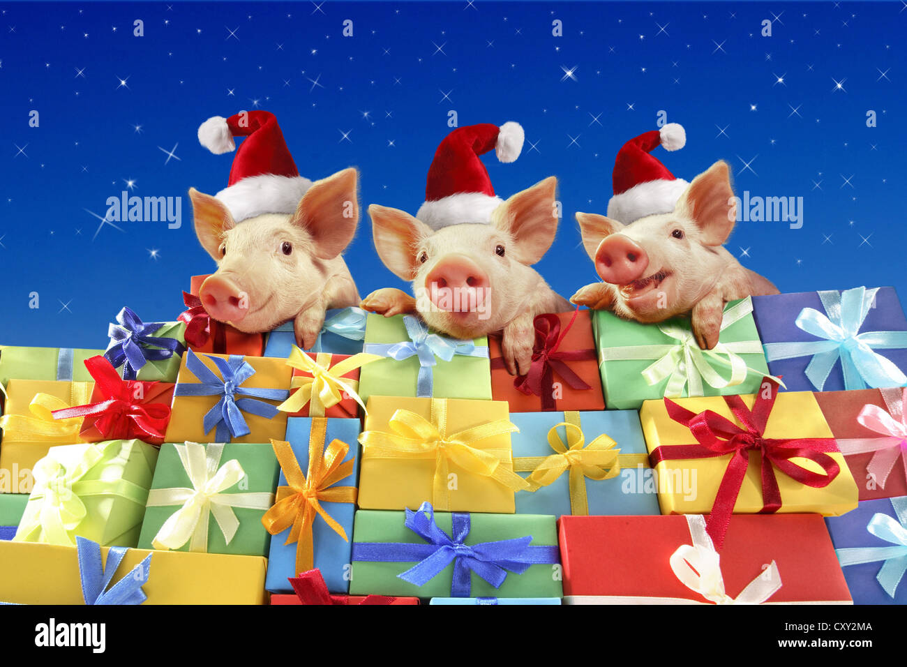 Piglets wearing Santa hats sitting on a pile of gifts - Stock Image