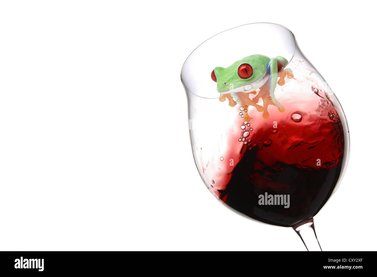 Red-eyed Tree Frog (Agalychnis callidryas) sitting on a wine glass with red wine Stock Photo