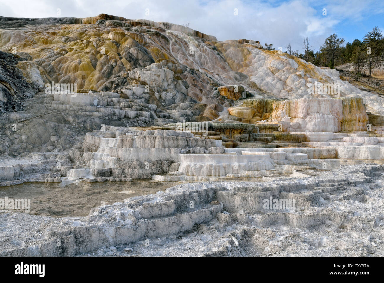 Living Color sinter terraces, coloured by thermophilic bacteria, Lower Terraces Area, Mammoth Hot Springs - Stock Image
