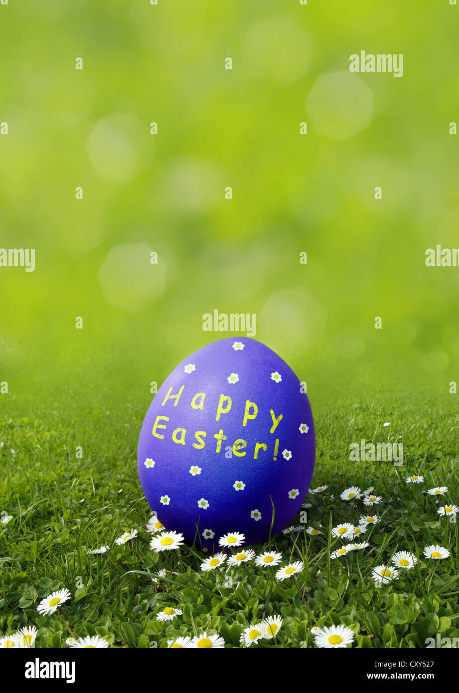 Blue Easter egg with 'Frohe Osten' wishes, German for 'Happy Easter' on a meadow with daisies - Stock Image