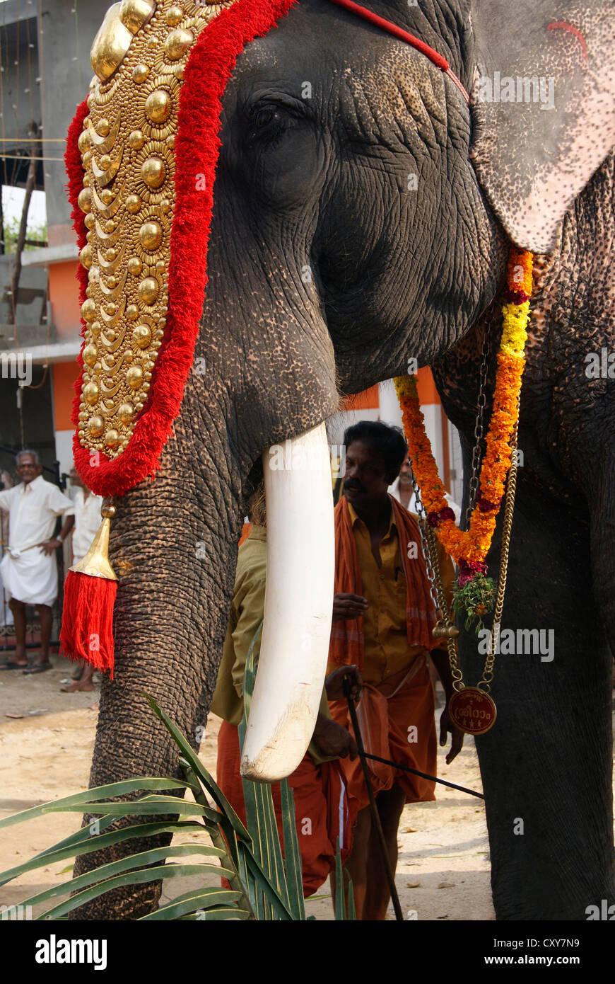 Kerala Decorated Elephant Stock Photos Kerala Decorated Elephant