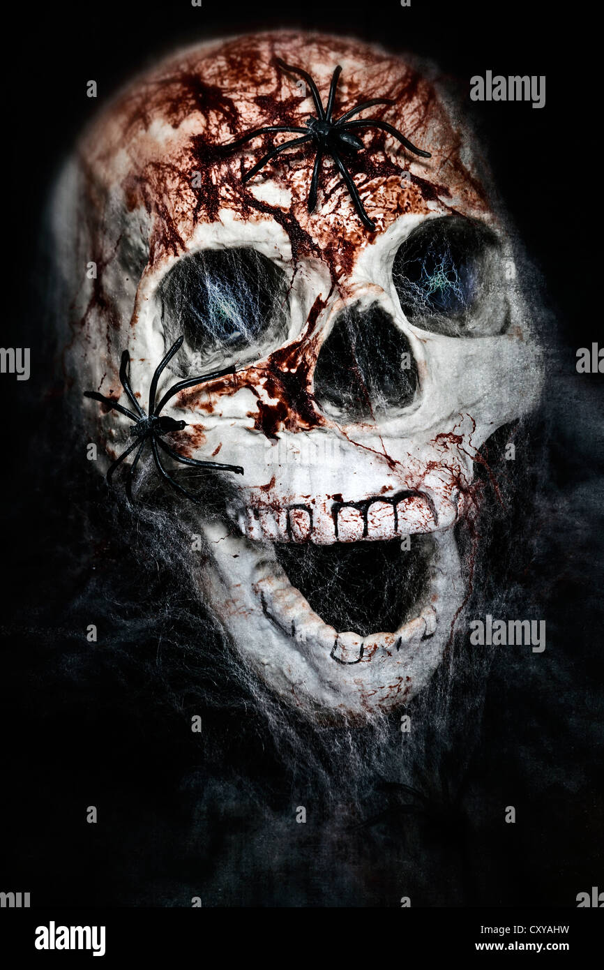 a bloody skull with cowebs and spiders - Stock Image