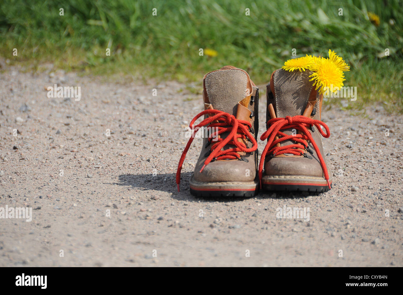 Hiking boots with dandelion flowers on a path - Stock Image