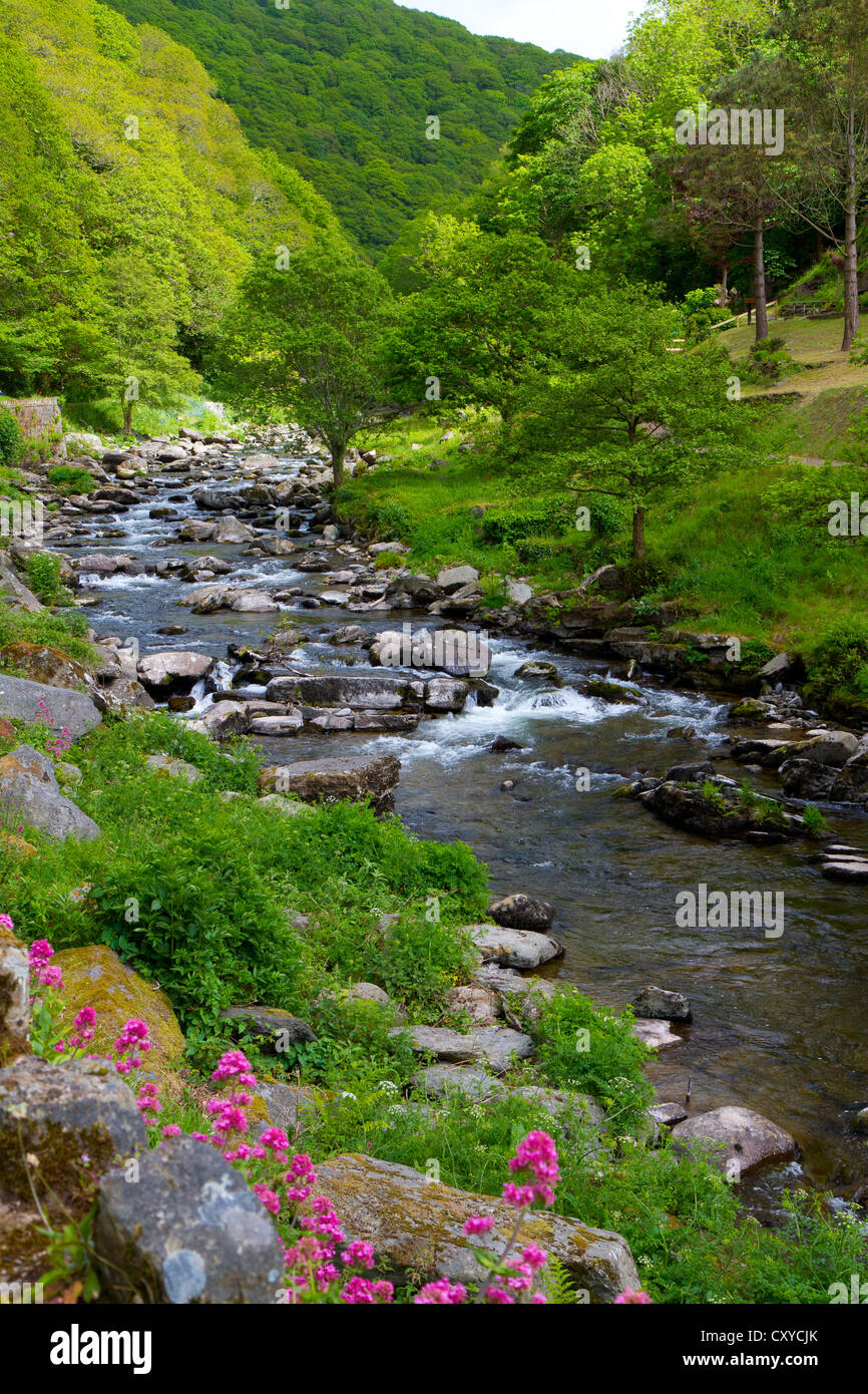 Lynmouth to Watersmeet walk along the River Lyn in Devon England. Stock Photo