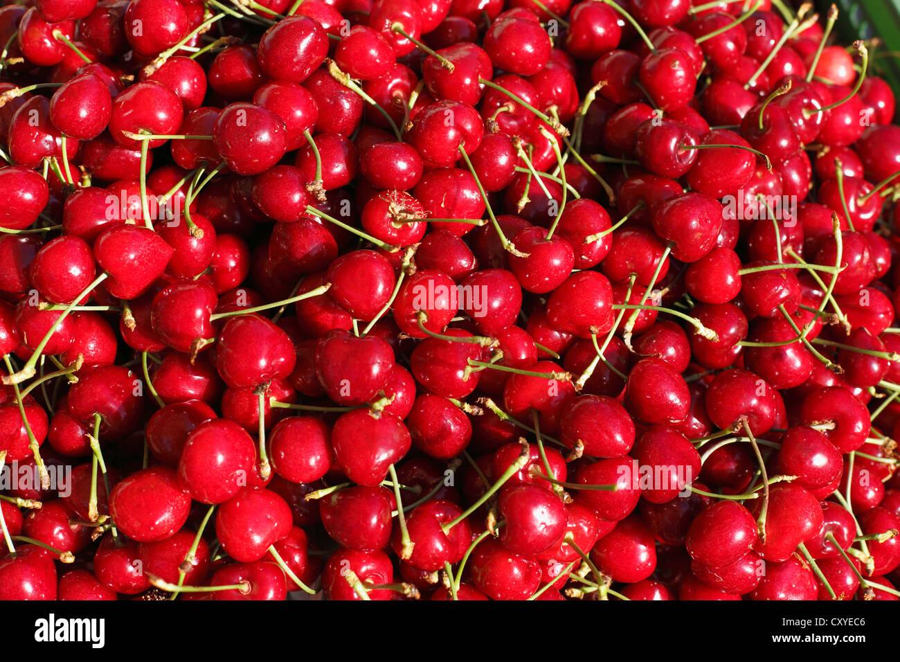 Cherries, Styria, Austria, Europe - Stock Image