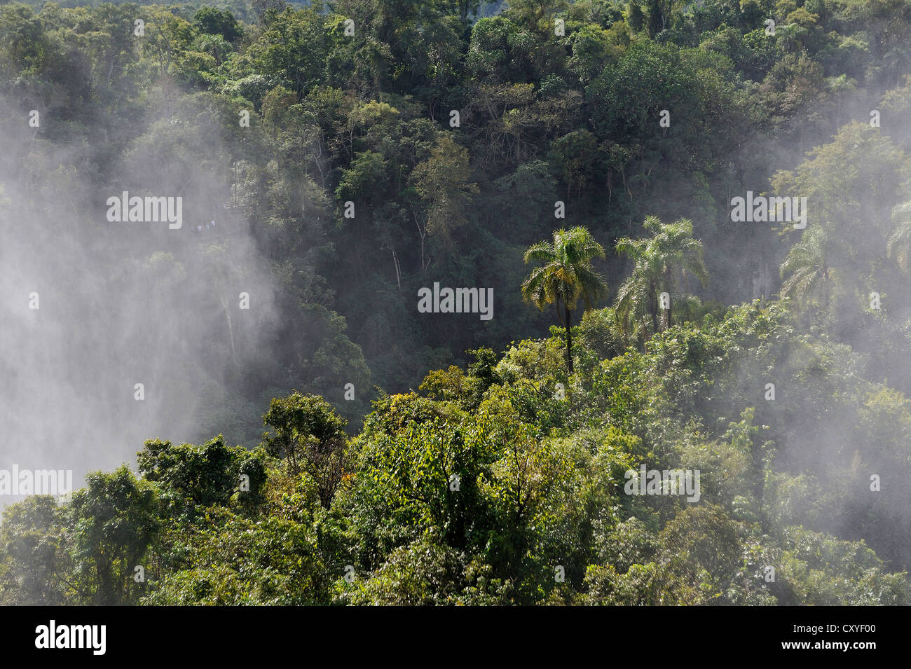Spray covering the rain forest, Iguazu or Iguacu Falls, UNESCO World Heritage Site, at the border of Brazil and - Stock Image