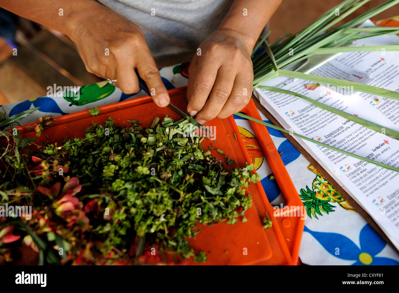 Woman cuting herbs from the village's garden for medicinal plants for making natural medicine, Comunidad Vy'a - Stock Image