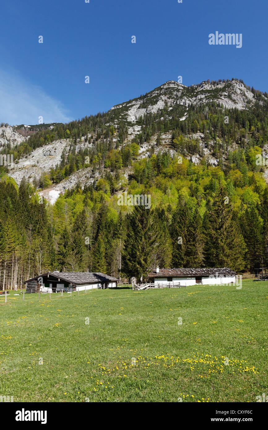 Loedenalm alp, Chiemgau region, Chiemgau Alps, Upper Bavaria, Bavaria - Stock Image