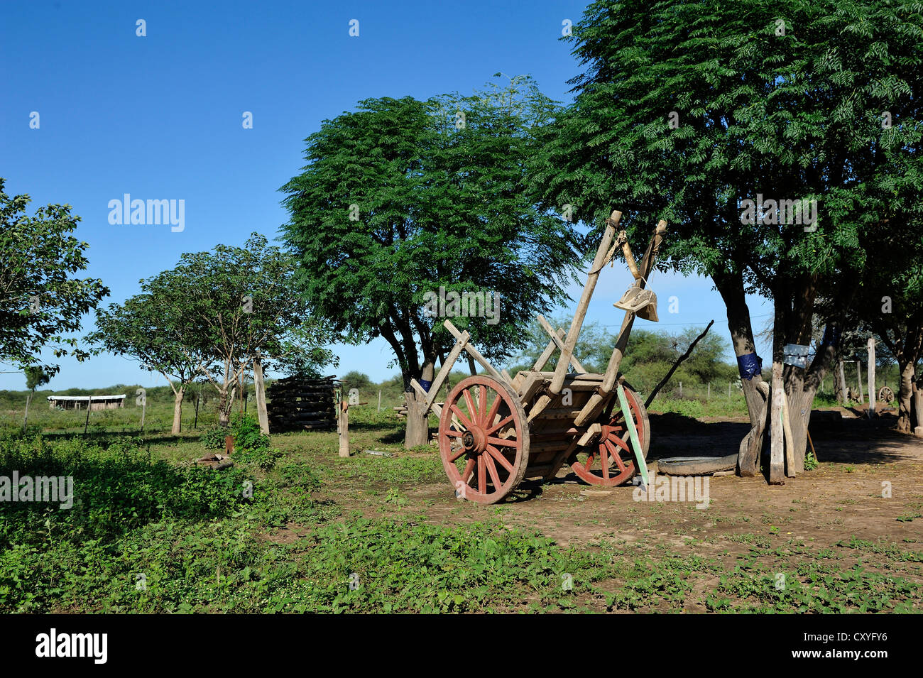 Ox-carts on a farm, Gran Chaco, Santiago del Estero Province, Argentina, South America - Stock Image