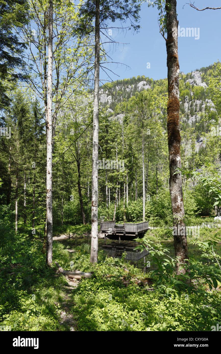 Lettmair Au, Gesaeuse National Park, Ennstal Alps, Upper Styria, Styria, Austria, Europe - Stock Image