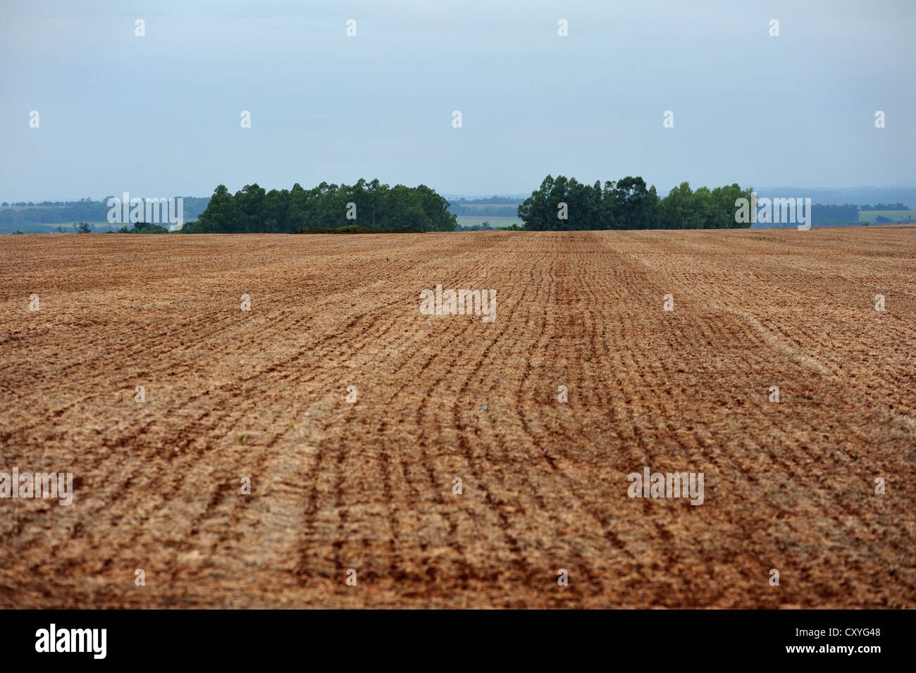 Plowed field owned by a large-scale landowner, remains of the original forest vegetation at the back, Alto Parana, - Stock Image