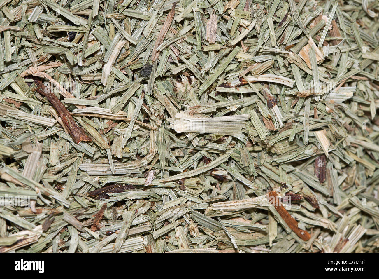 Horsetail tea, organic tea Stock Photo