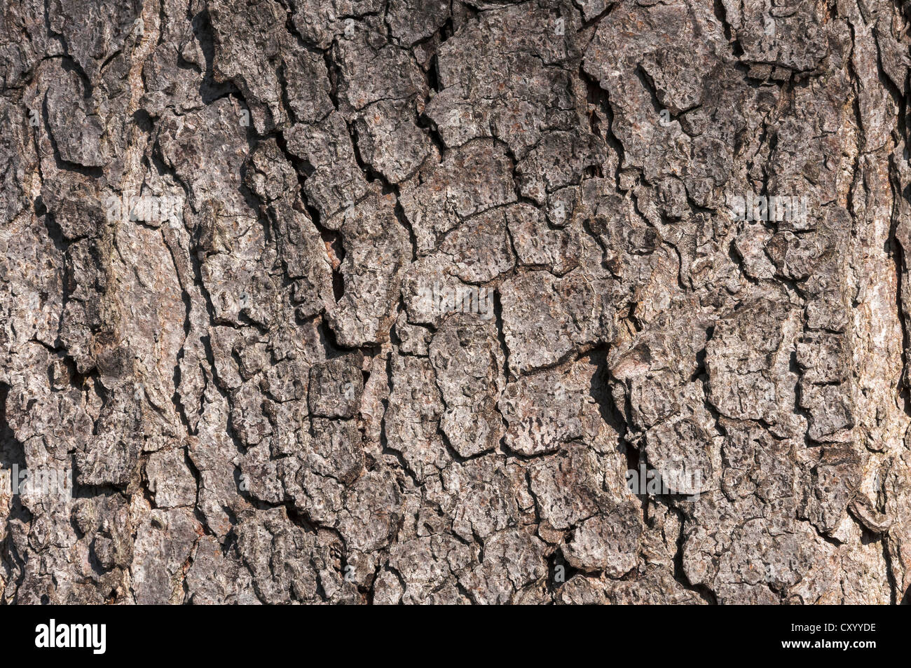 chestnut tree bark stock photos amp chestnut tree bark stock
