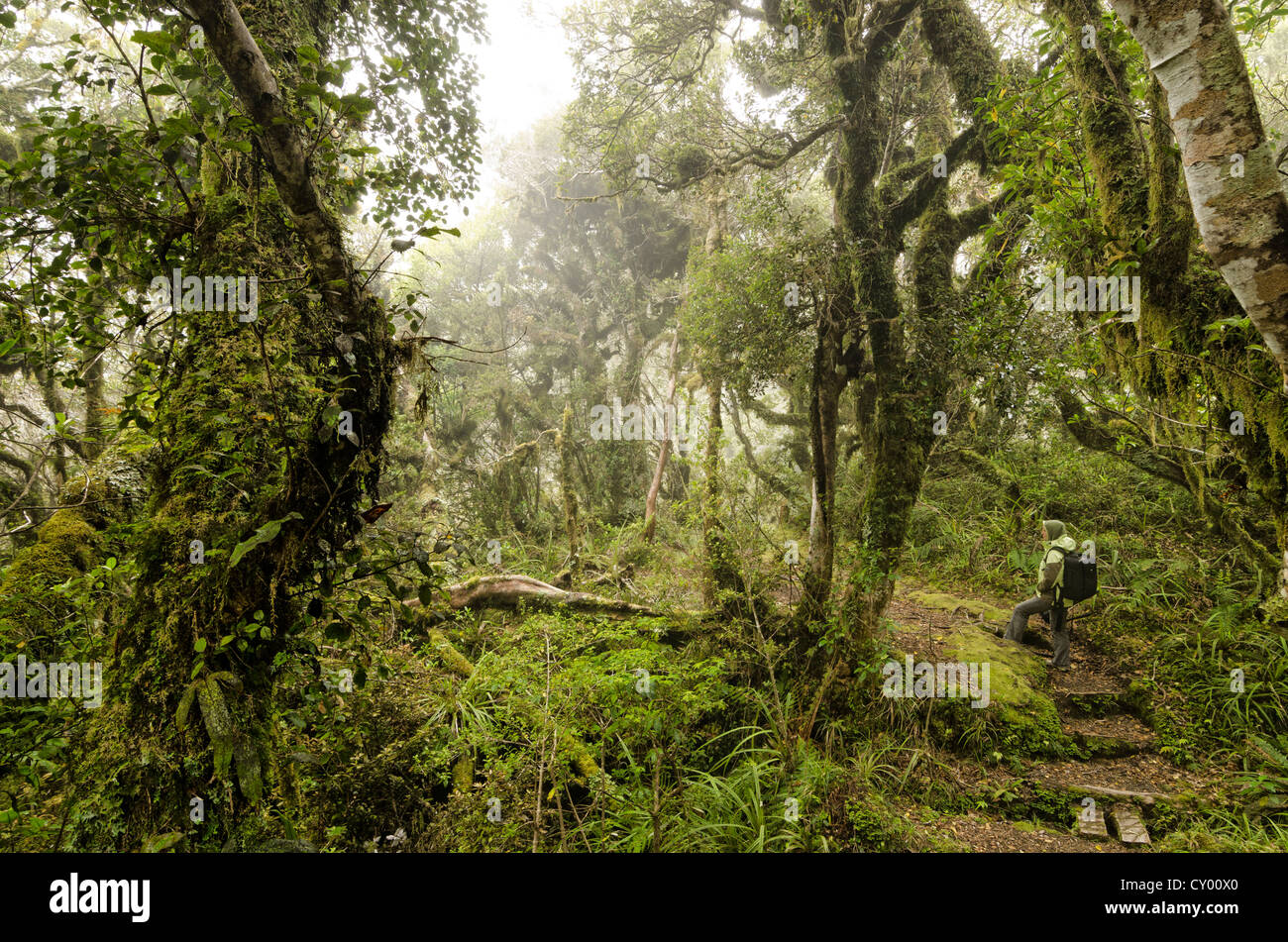 Female hiker carrying a backpack in the rain forest, hiking path in the Egmont National Park, North Island, New - Stock Image