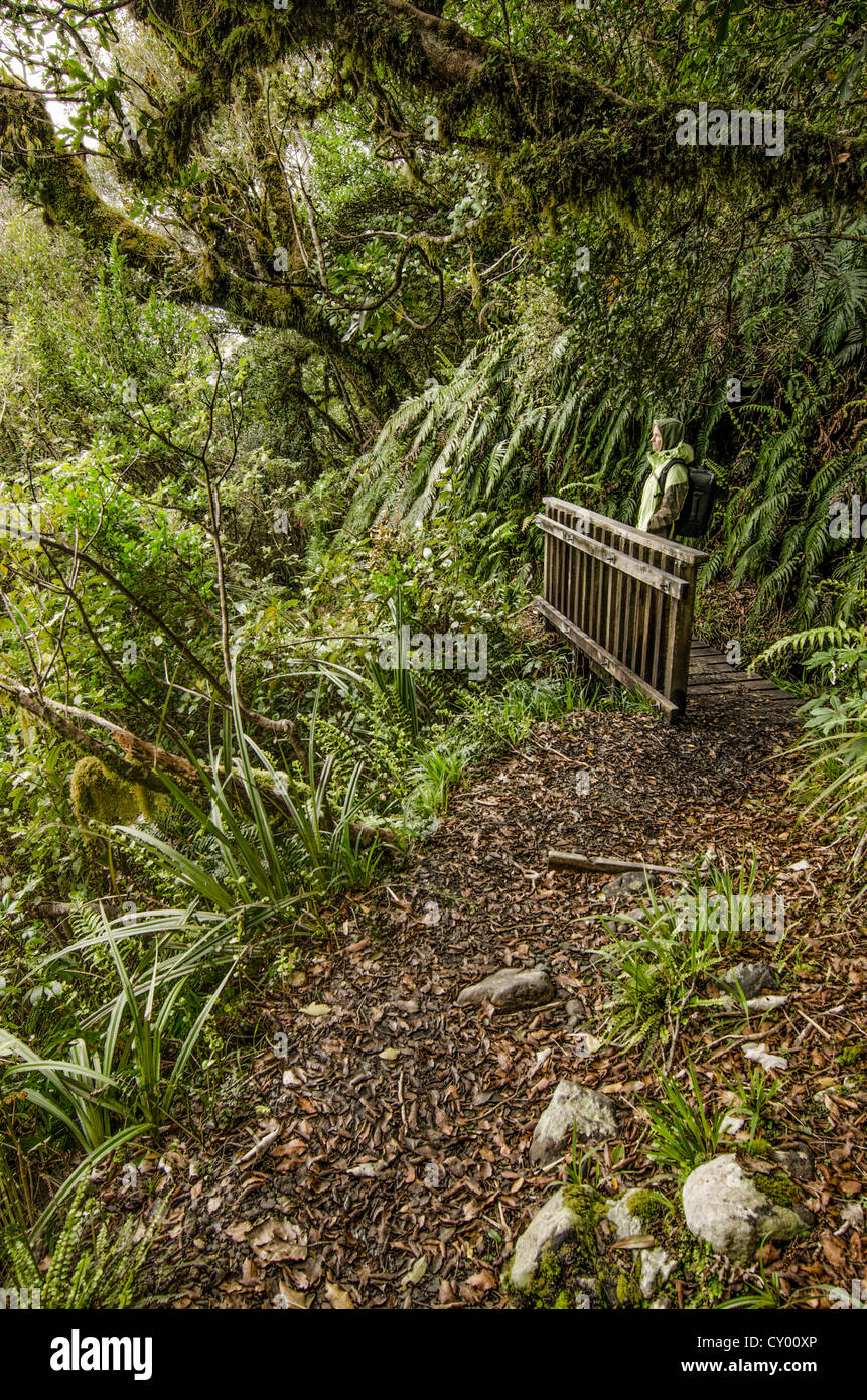 Female hiker carrying a backpack in the rain forest, hiking path in the Egmont National Park, North Island, New Zealand Stock Photo