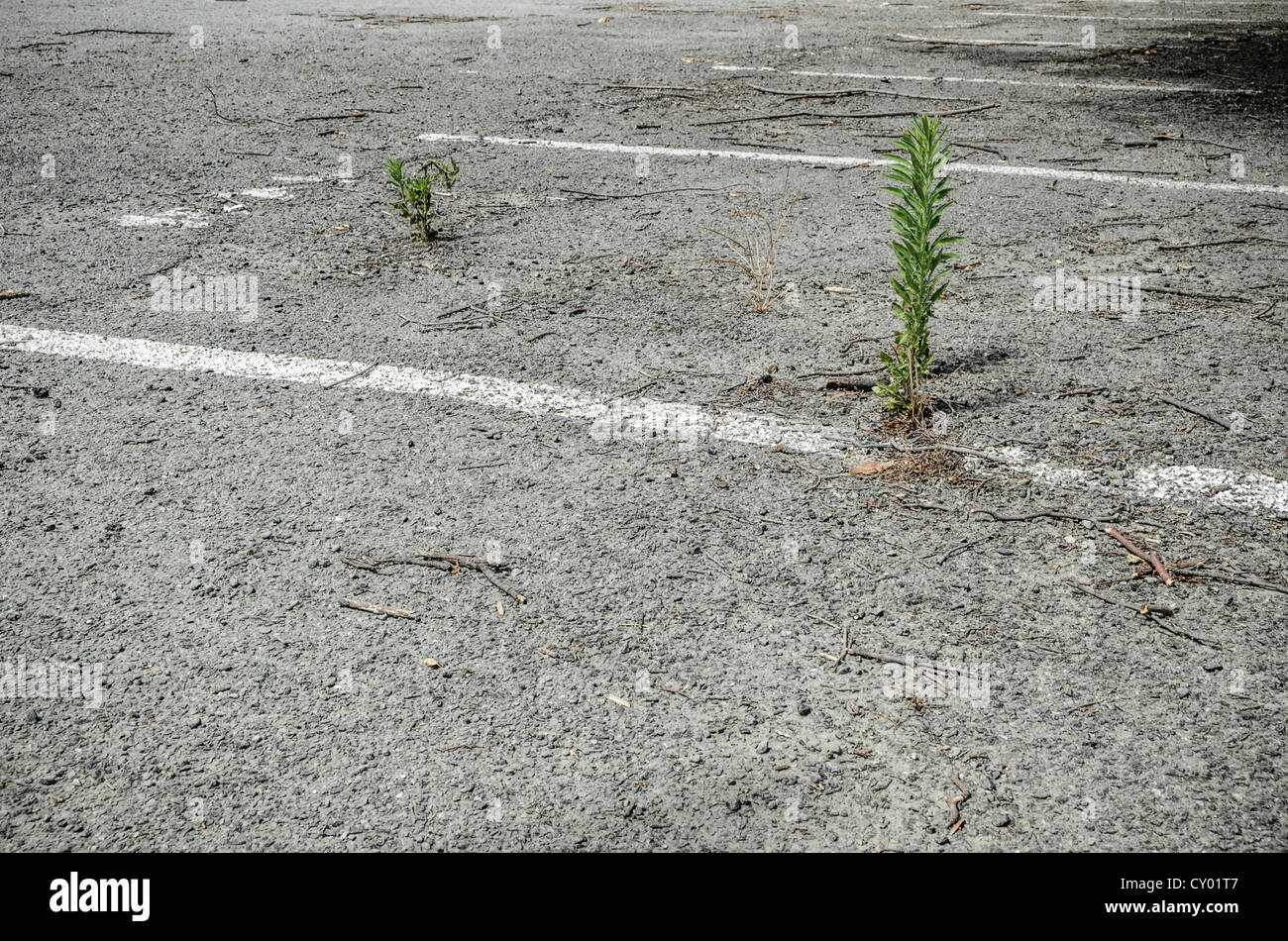 Deserted carpark in the evacuated earthquake district of Christchurch, South Island, New Zealand Stock Photo