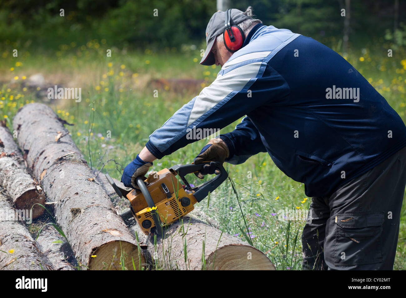 Pensioner cutting a spruce log with chainsaw , Finland Stock Photo