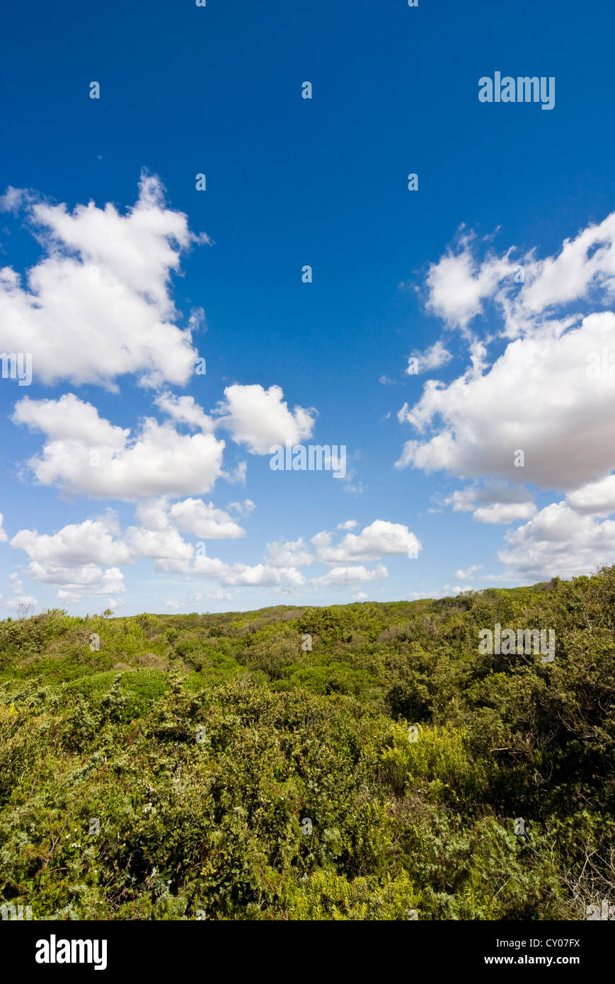 Dunes and Mediterranean bush behind Capalbio Beach, Capalbio, Grosseto Province, Tuscany, Italy - Stock Image