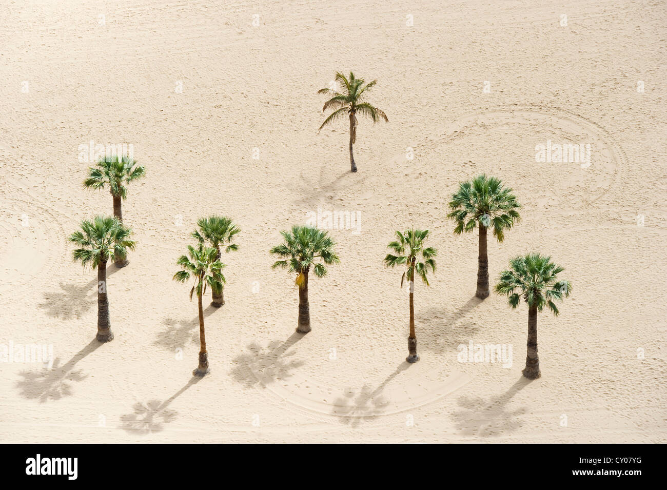 Bird's eye view, palm trees and beach, Playa de las Teresitas, San Andres, Tenerife, Canary Islands, Spain, - Stock Image